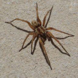 Уничтожение пауков в Всеволжске